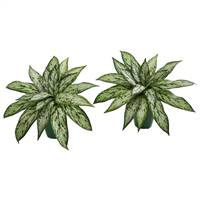Silver Queen Artificial Plant in Green Planter (Set of 2)