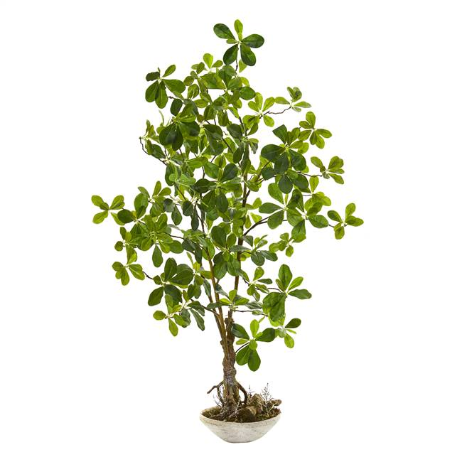 4' Schefflera Bonsai Artificial Plant in Planter