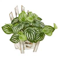 "8"" Watermelon Peperomia Artificial Plant in Chair Planter (Real Touch)"