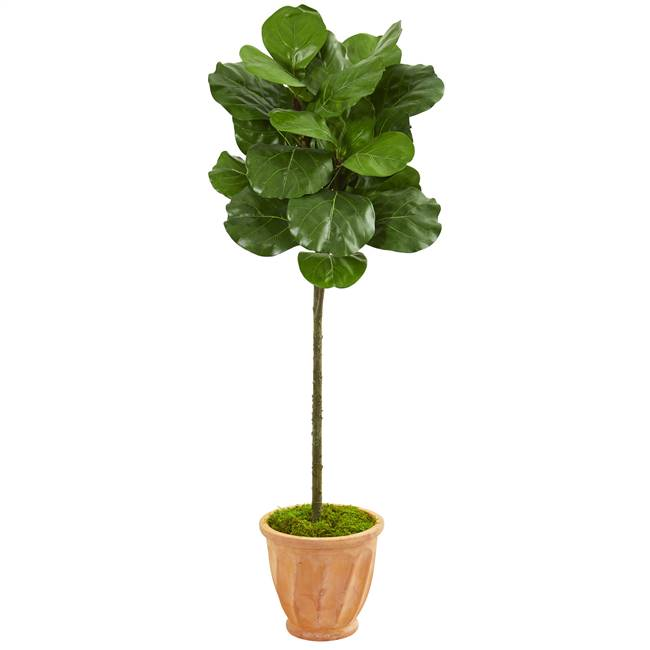 "57"" Fiddle Leaf Artificial Tree in Terra Cotta Planter"