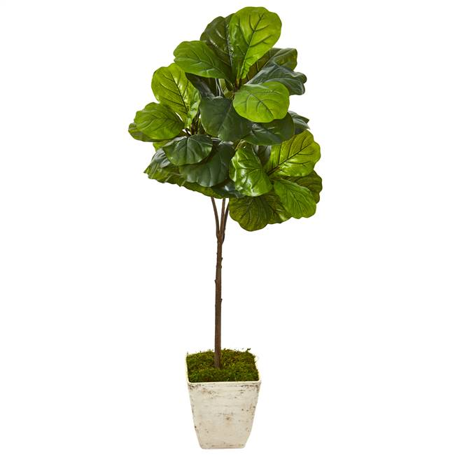 5' Fiddle Leaf Artificial Tree in Country White Planter (Real Touch)
