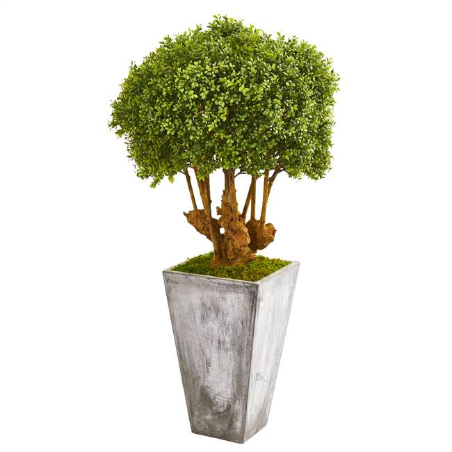 "51"" Boxwood Artificial Topiary Tree in Cement Planter (Indoor/Outdoor)"