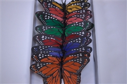 Large Multi-Colored Butterfly