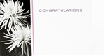 """Congratulations"" Spider Mum Enclosure Cards (pack of 50)"