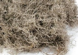 Spanish Moss (5 Pounds)