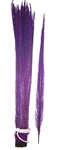 "Dyed Purple Ringneck Pheasant Tail Feathers 20""-22"" (Pack of 100)"