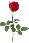 "29.5"" ROSE BUD (Case of 24)"