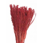 "Canary Grass, Red, 24"" 1 Bunch"