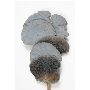 "Mushroom Sponge 16"", Gray Wash, 6pc/Bunch"