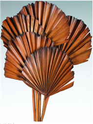 "Palm Leaves, Burnt Tips, Spice 5"" x 20"", 5pc/Bunch"