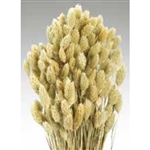 Phalaris, Natural, 4oz/Bunch