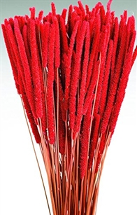 Rat Tail Millet, Red Color, 3oz/Bunch