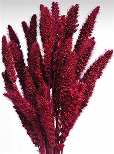 Dried Setaria, Berry Color, 4oz/Bunch