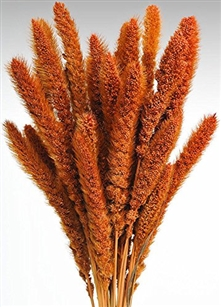 Dried Setaria, Burnt Oak Color, 4oz/Bunch