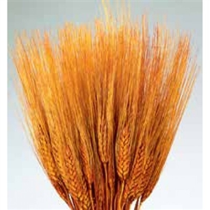 Wheat, Burnt Oak Color, 8oz/Bunch