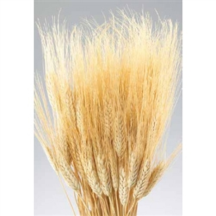 Wheat, Natural Color, 8oz/Bunch