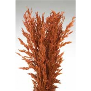 "Wild Oats, Burnt Oak Color, 38"", 8oz/Bunch"