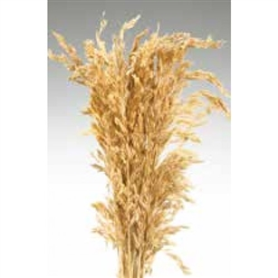 "Wild Oats, Natural Color, 38"", 8oz/Bunch"