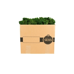 REINDEER DARK GREEN MOSS BULK 3 POUND BOX