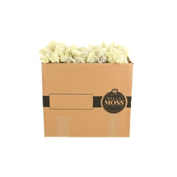 Reindeer Natural Color Moss Bulk 3 Pound Box