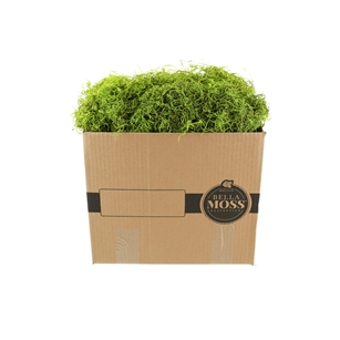 Bella Moss, Preserved Spanish Moss, Green Bulk 3lb box
