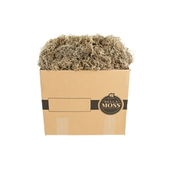 Bella Moss, Preserved Spanish Moss, Natural Bulk 3lb box