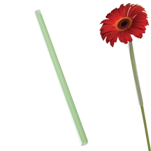 "8 1/4"" Flower Gerbera Straw, Green,  Pack Size: 2500"