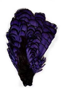 Lady Amherst Pheasant Crown Dyed Purple