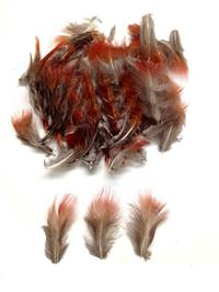 Golden Pheasant Red Plumage - Per 1/2 lb