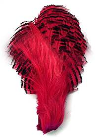 Golden Pheasant Crown, Dyed Fuchsia