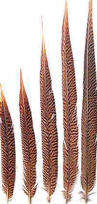 "Golden Pheasant Tail Sides 16-18"" - Per 100"