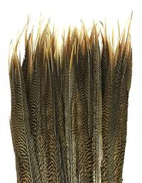 "Golden Pheasant Tail Sides 18-20"" - Per 100"