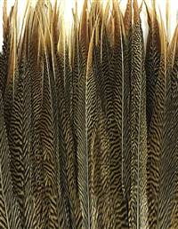 "Golden Pheasant Tail Sides 25-30"" - Each"