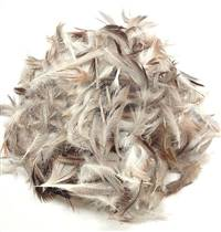 Loose Mixed Domestic Duck Feathers - Per lb