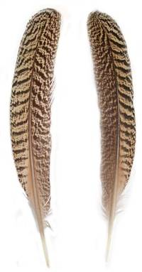 "Mottled Peacock Wing Quills 10"" & Up - Per Pair"