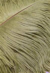 "Ostrich Drabs 14-17"" Dyed Light Olive - Per 1/2 lb"