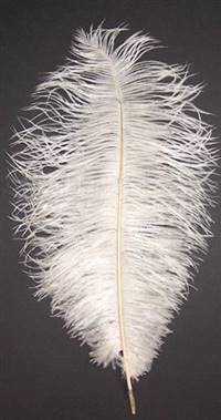 "Ostrich Drabs 9-13"" Bleached Off White - Per 1/2 lb"