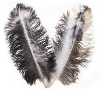 "Chinchilla Ostrich Wing Feathers (Byocks) 20-24"" - Per 1/4 lb"