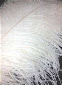 "Ostrich Wing Plumes #1 - 17-22"" Dyed Ivory - Per 1/4 lb"
