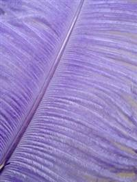 "Ostrich Wing Plumes #1 - 18-24"" Dyed Lavender - Per 1/4 lb"