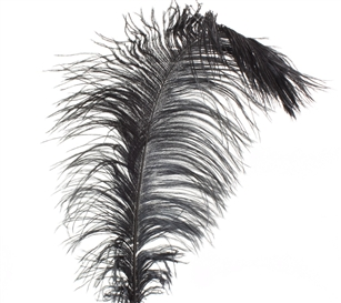 EXTRA LARGE, Ostrich Wing Plumes 25''-29'', Dyed Black (1/2 Pound)