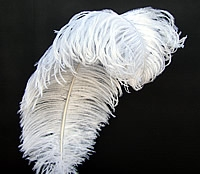 "EXTRA LARGE, Ostrich Wing Plumes 25""-29"", Bleached White (1/2 Pound)"