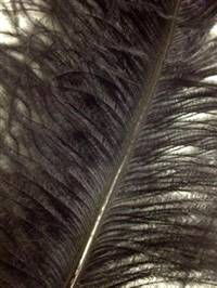 "Ostrich Wing Plumes #2 - 25-29"" Dyed Black - Per 1/4 lb"