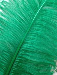 "Ostrich Wing Plumes #2 - 25-29"" Dyed Green  - Per 1/4 lb"