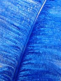 "Ostrich Wing Plumes #2 - 25-29"" Dyed Royal Blue  - Per 1/4 lb"