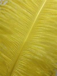 "Ostrich Wing Plumes #2 - 25-29"" Dyed Yellow - Per 1/4 lb"