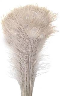 "Eyed Peacock Sticks 30-35"" Bleached - Per 100"