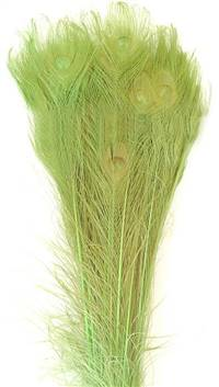 "Eyed Peacock Sticks 35-40"" Dyed Lime over Bleached - Per 100"