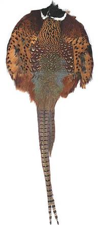 Ringneck Pheasant Pelt #1 With Tail