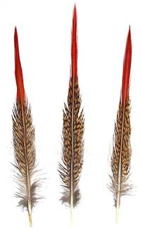"Golden Pheasant Red Tips (Large 8-10"") - Per 100"